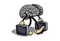 cervelli